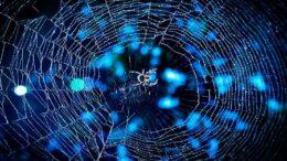 vast web of deceit
