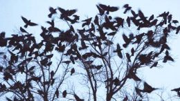 This image shows that a tree full of birds